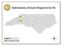 NCDA Giant Hogweed map