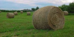 Hay Bales in Green Pasture