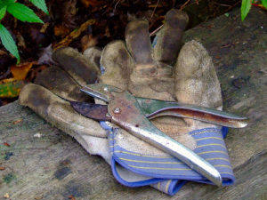 Gloves and Pruning Tool
