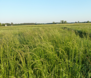 Cover photo for Webinar: Wheat Marketing & Weed Control